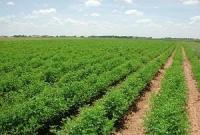 طرح تغییر الگوی کشت در قم اجرا می شود/ روستاییان بیشترین بهره برداران بخش کشاورزی قم را تشکیل میدهند