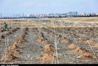 آغاز نهضت ملی کاشت ۱۴ میلیون اصله نهال از قم/ ۲۰۰ هزار نهال در منطقه کوه نمک کاشته میشود