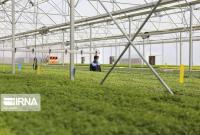 تولید بخش کشاورزی قم با استفاده از مسئولان فنی افزایش مییابد