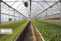 گلخانه سطح تولید و اشتغال بخش کشاورزی قم را افزایش میدهد
