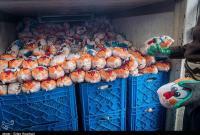 افزایش توزیع مرغ در قم تا ۸۰ تن در روز/ سهمیه ۵۰۰ تن مرغ منجمد وارد شد
